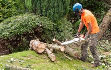 additional services offered by West Midlands tree surgeons