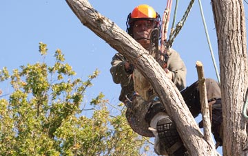 finding qualified West Midlands tree surgeons