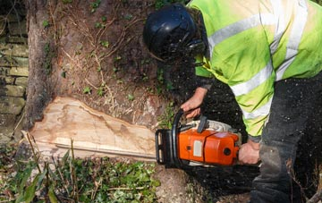 tree removal West Midlands