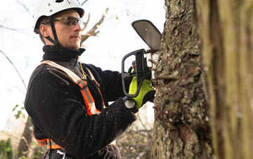 West Midlands tree surgery costs