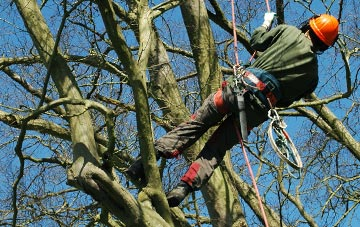 tree surgery West Midlands