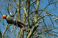 West Midlands tree surgery services