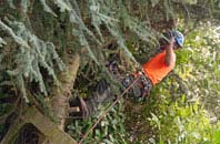 free West Midlands tree surgery quotes